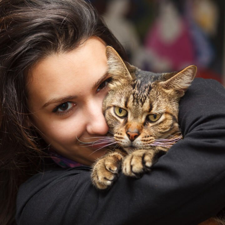 14 Most Affectionate Cat Breeds You'll Love to Snuggle