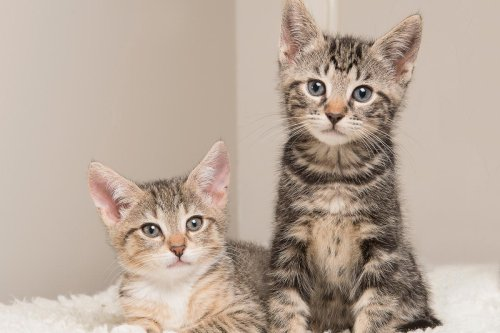 When is a Cat An Adult? From Kitten to Fully Grown