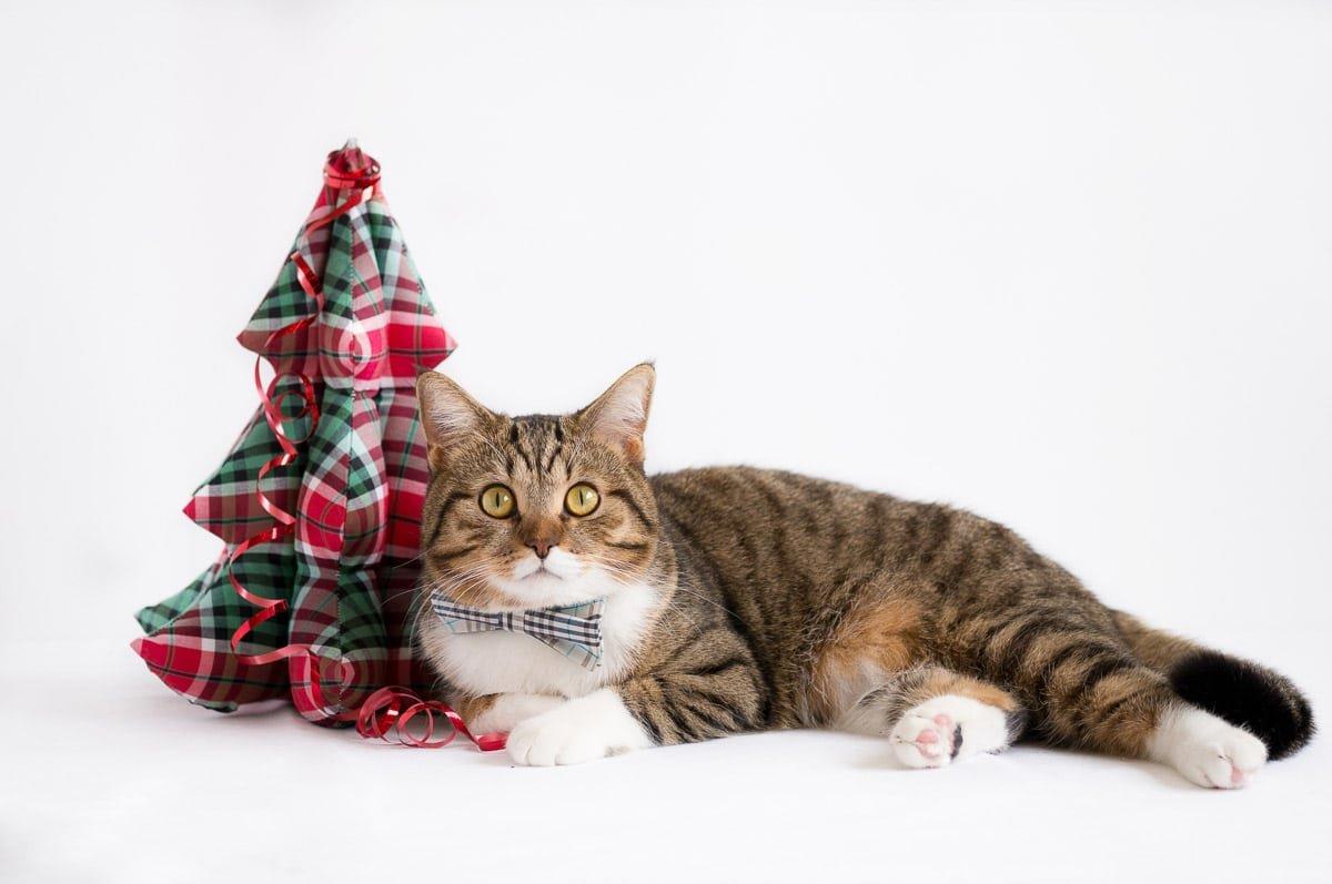8 Fun Christmas Cat Collar Options
