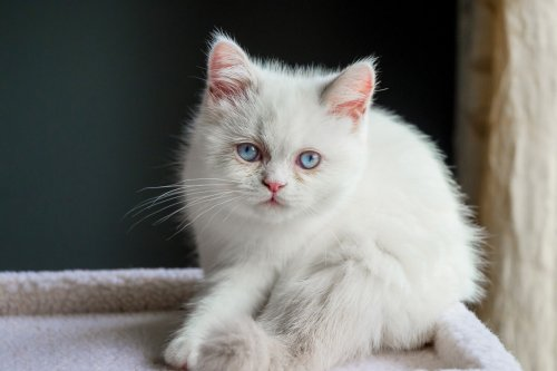 12 Sensational Small Cat Breeds You'll Love