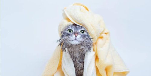14 Things You Need to Know About Caring for Cats