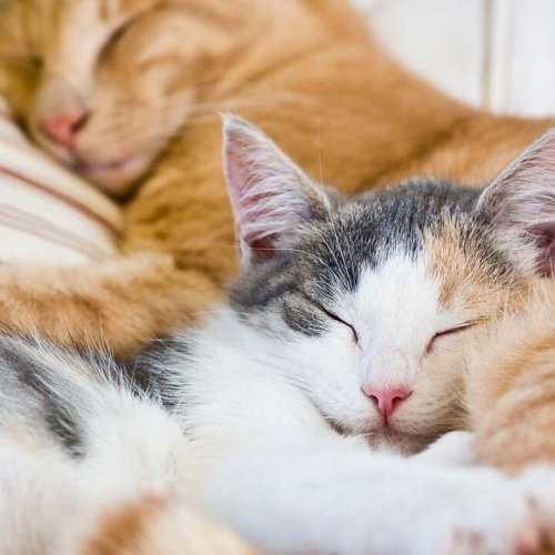 How Long do Cats Sleep? 8 Things Owners Should Know