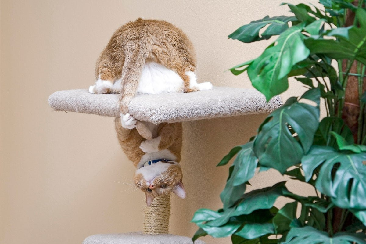 Why Do Cats Chase Their Tails? 5 Things You Need to Know