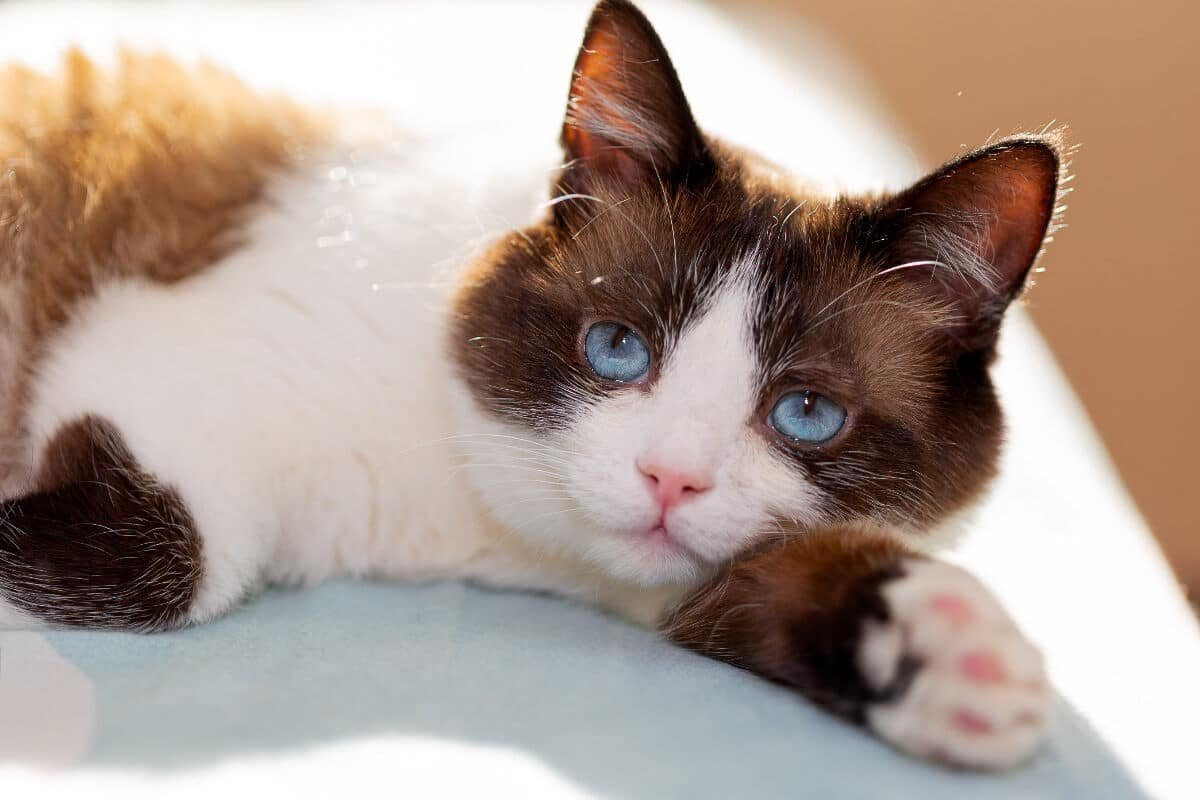How To Pet A Cat: 7 Things You Need to Know