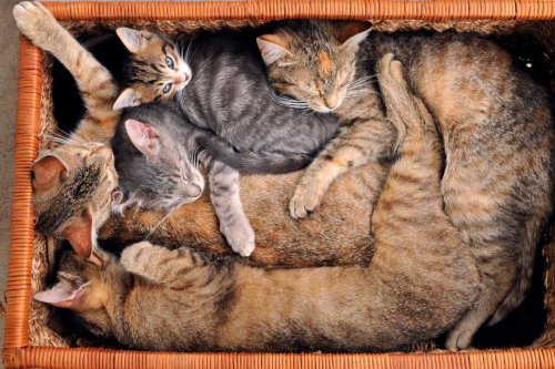 14 Cat Sleeping Positions and What they Reveal