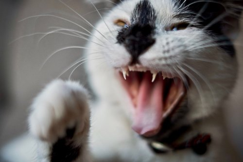 Why Does My Cat Attack Me? 8 Reasons You Should Know