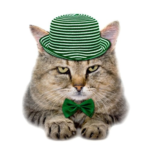 12 Bang On Irish Cat Names for St Patricks Day