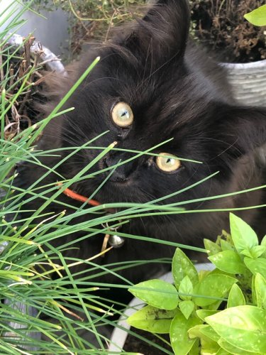What Smells do Cats Hate: 7 Must Avoids