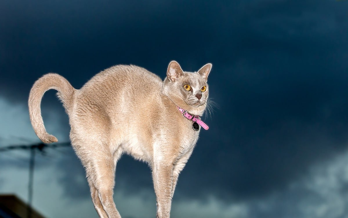 9 of the Strangest Cat Behaviors
