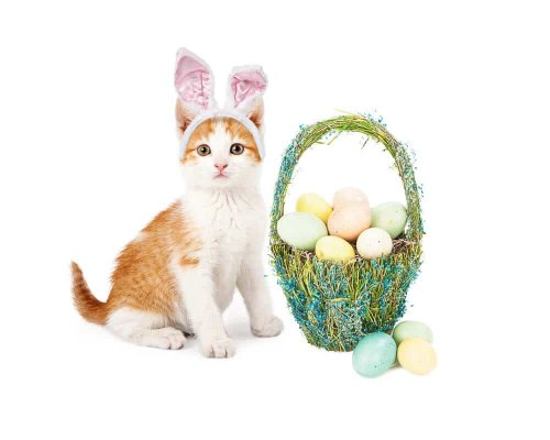 Best Costumes for Pet Cats