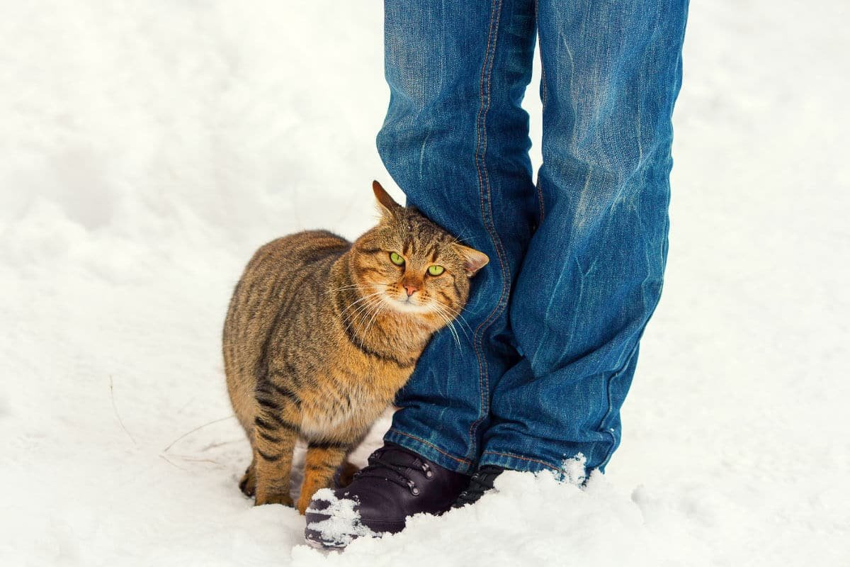 What Does It Mean When A Cat Rubs Against You? 5 Reasons You Should Know