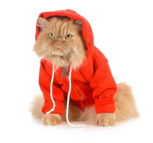 Clothing for Cats: How to find out if your Cat will enjoy dressing up