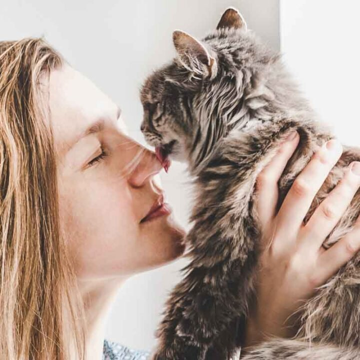 Why Does my Cat Lick me then Bite Me?