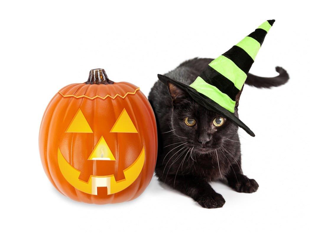 6 Spooky Halloween Cat Collar Options