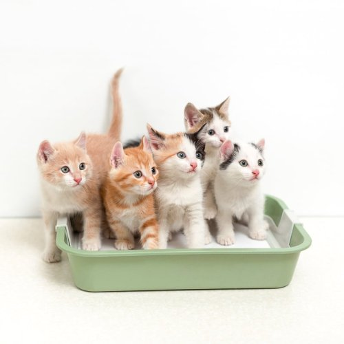 Ultimate Guide to the Best Cat Litter for your favourite feline