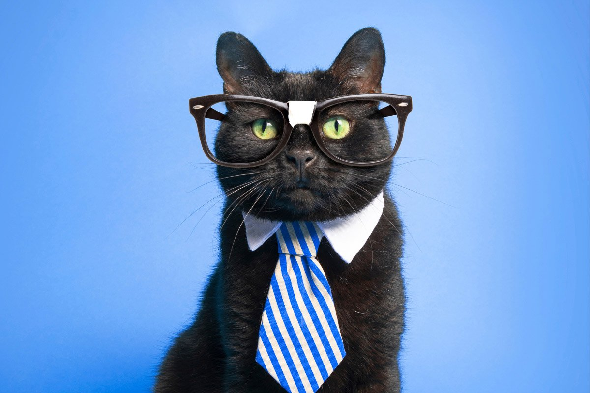 Subscribe to The Discerning Cat Newsletter