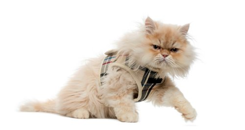 7 Best Escape Proof Cat Harness Options You Cat Can't Overcome 2021