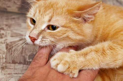 How To Train A Cat Not To Bite: 6 Things You Need to Know