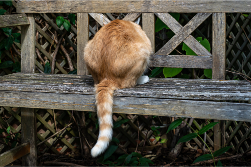 Why Does My Cat Fart So Much? 7 Reasons