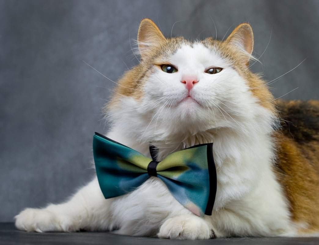 20 Cutest Cat Breeds You'll Want to Cuddle