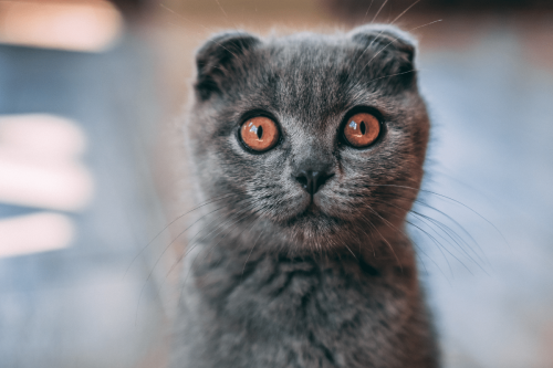 5 Reasons Why Your Cat Likes to Stare at Your + More Odd Cat Stuff