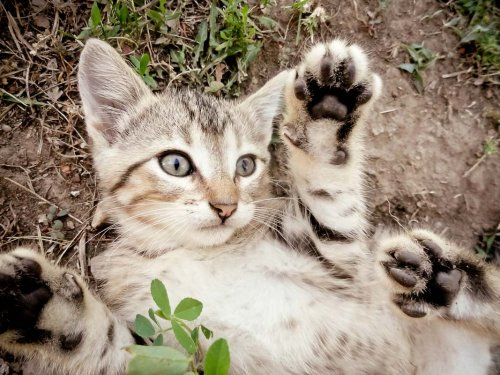 Why Do Cats Roll in the Dirt? 9 Reasons for Dust Bathing