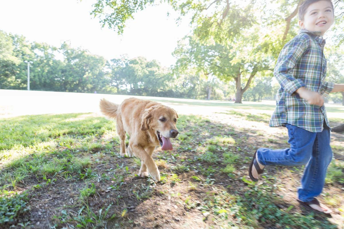 10 Reasons Your Dog Follows You Everywhere - cover