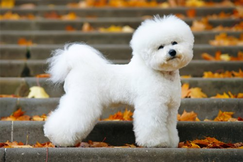 27 Most Beautiful Dog Breeds You'll Adore