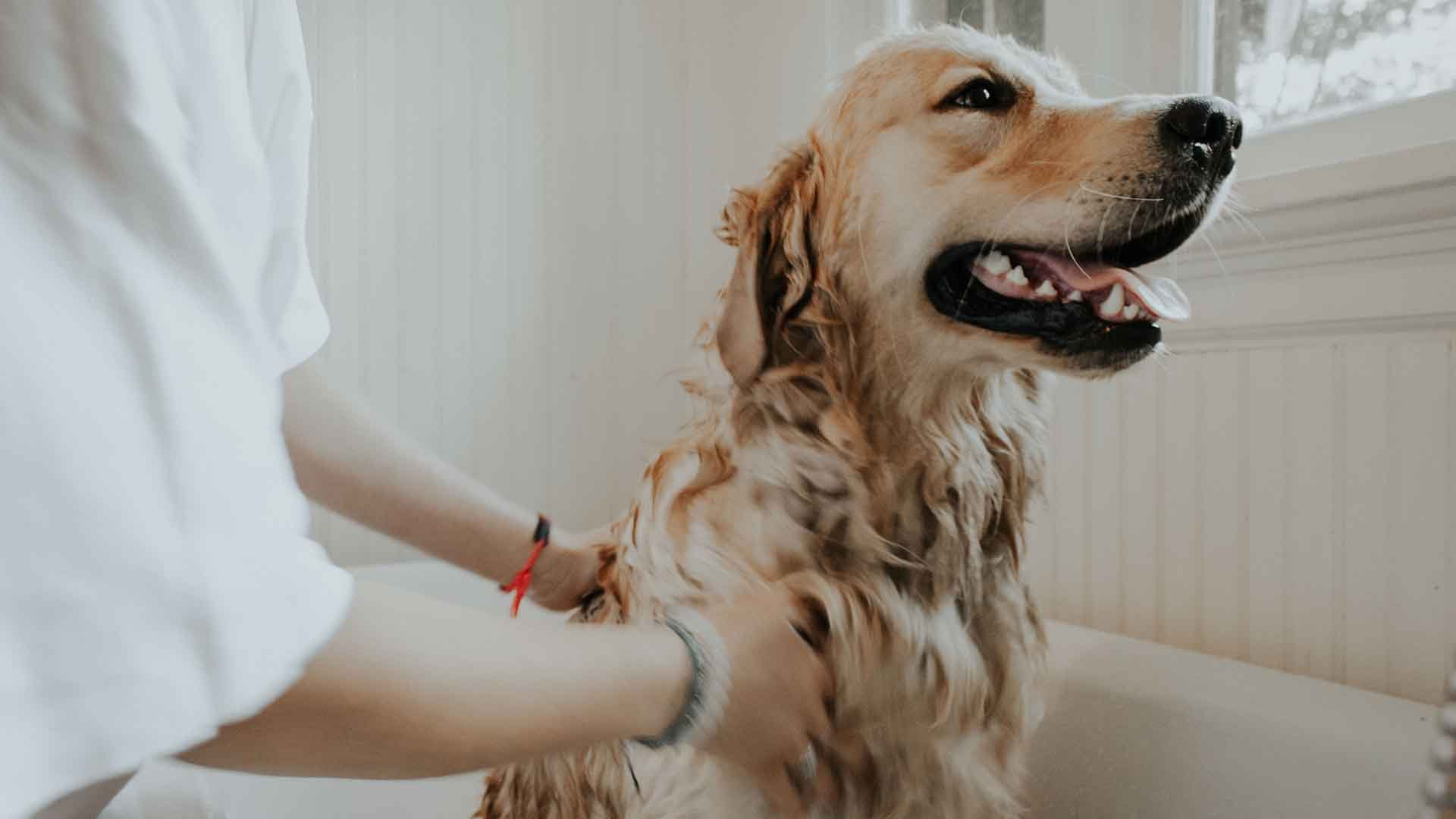 20 Best Flea Treatments For Dogs 2021: Reviews & Buying Guide