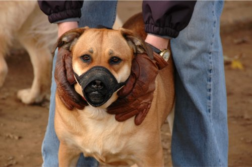 27 Most Dangerous Dog Breeds