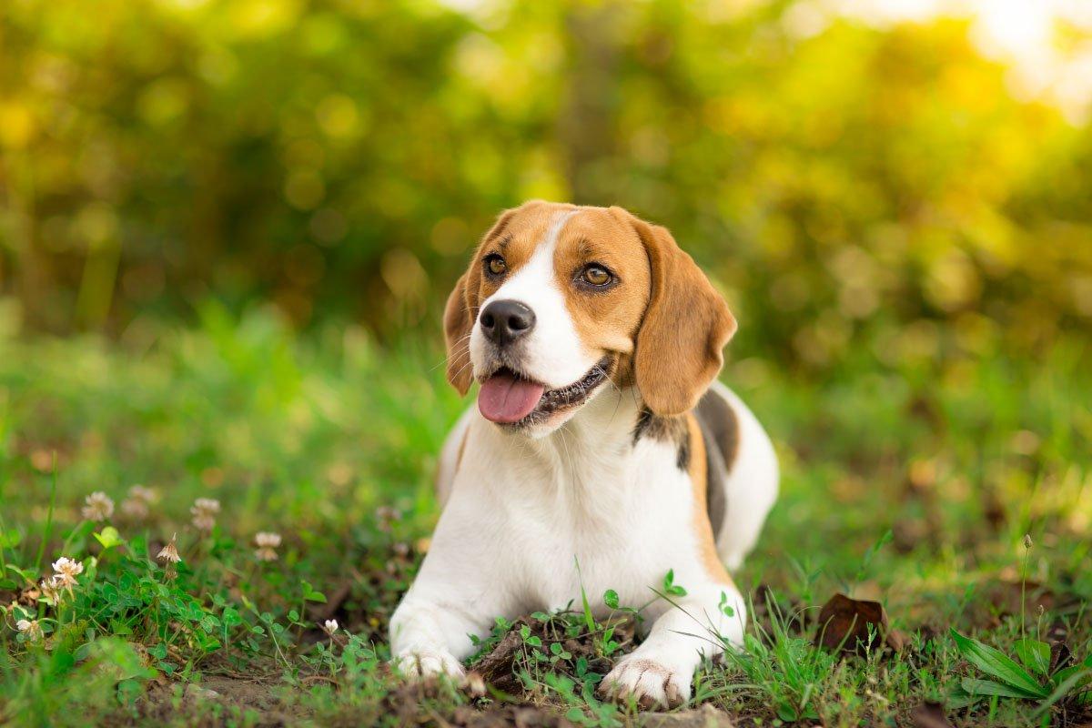 13 Best Behaved Dog Breeds You'll Love