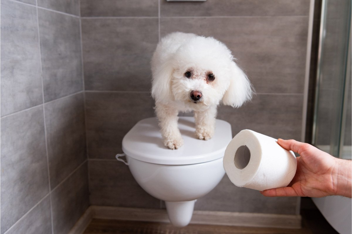 5 Pretty Gross Things Dogs Like to Do and Why - cover