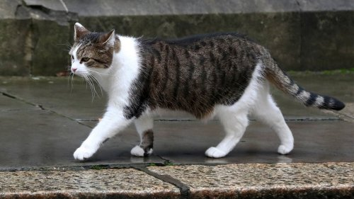 The Stinky Chemical in Cat Pee Could Fuel the Hydrogen Future