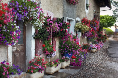 Hanging baskets: how to plant & maintain them