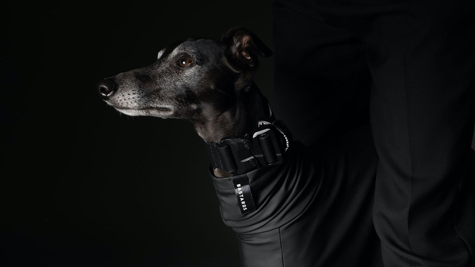 BASTARDS dog wear collection features 3 comfortable, stylish designs that suit all dogs