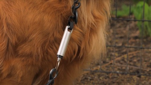 Pooch Pacer gentle dog training device provides intelligent, non-punitive nudges