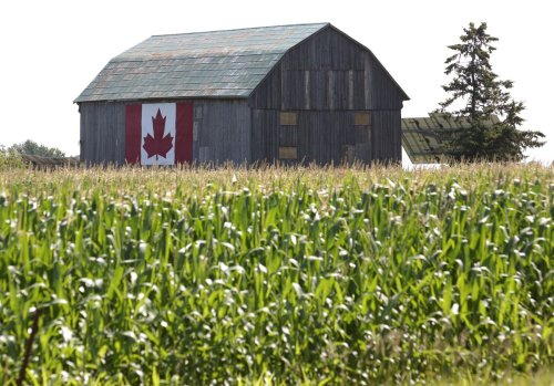 Opinion: Canada has all the ingredients to be a global leader in agriculture, but the opportunity won't last forever