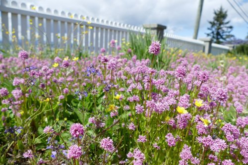 Rewilding, or letting native plants run their course, can be a boon for urban environments