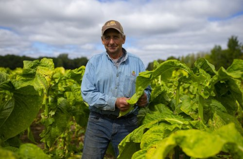 Quebec's last tobacco farmer hopes to continue his legacy