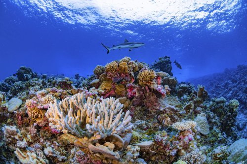 Coral reefs have lost half their ability to support human communities, Canadian researchers say