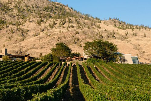 Ten wines to enjoy this August, including a summer staple from the Okanagan