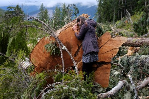 Opinion: The destruction of the last old growth forests has to stop. We must protect the mother trees
