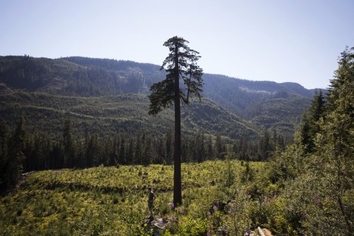 Opinion: The Pacific Northwest, strong and free: On the inevitable rise of Cascadia