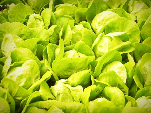 7 Things To Know About Outdoor Hydroponics For Home Gardening