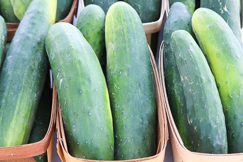 5 Tips For Growing Hydroponic Cucumbers At Home
