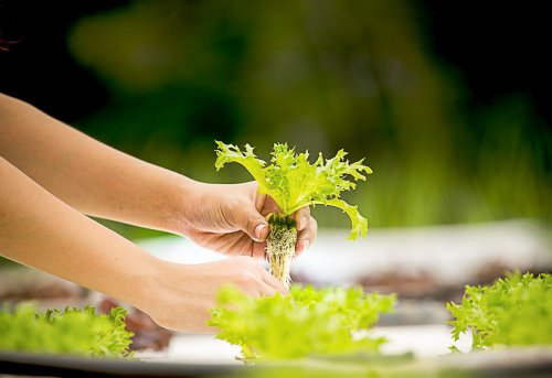 7 Easy to Follow Tips On Home Hydroponics For Beginners