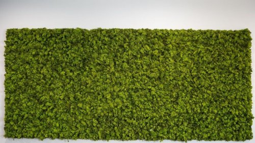 Is Installing An Artificial Moss Wall Worth It For The Home