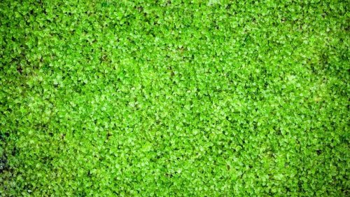 5 Steps To Easily Set Up An Outdoor Moss Wall At Home