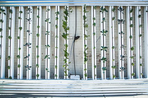 What Is Vertical Hydroponics For The Home And How Does It Work
