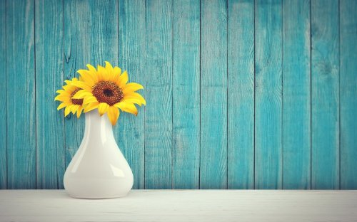The Best At Home Sunflower Growing Kits For Home Gardens